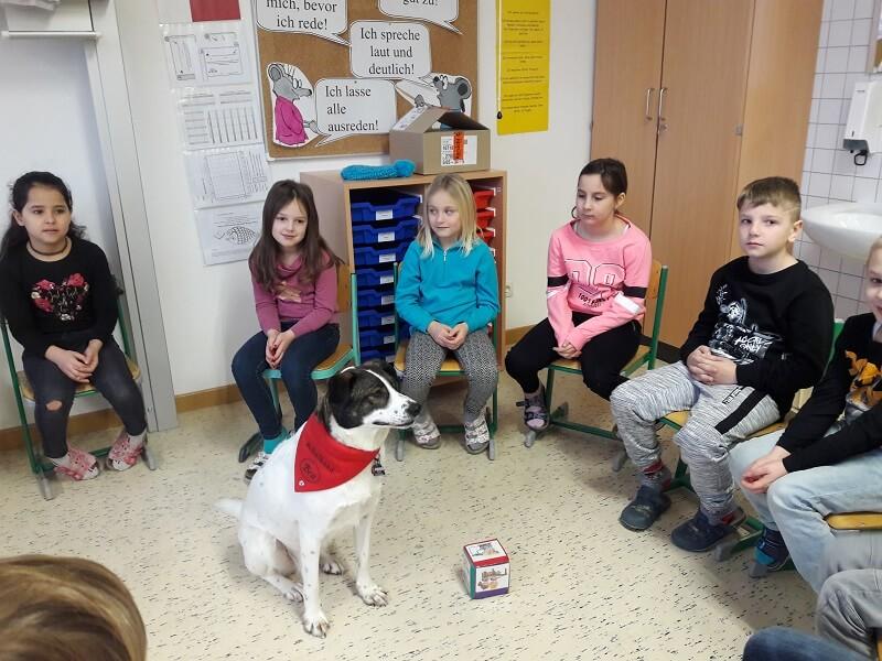 Schulhund Bea